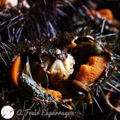 Oricios, cómo comerlos y cocinarlos